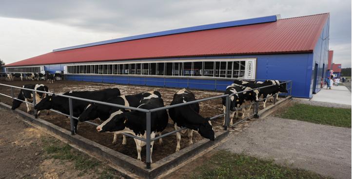 Строительство зданий сельхозназначения